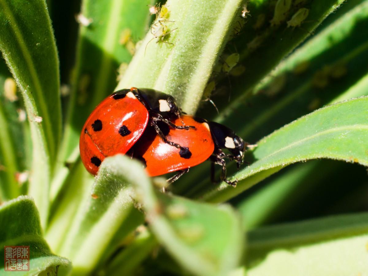 Biohacking Nederland: DNA hacking en lieveheersbeestjes-sex